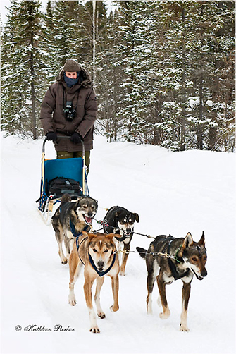 Dogsledding Yellowknife 2012