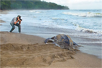 Nesting Leatherback Sea Turtle, Trinidad, 2014 by Dr. Wayne Lynch ©