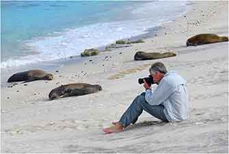 Sea Lions, Galapagos Islands 2016 by Dr. Wayne Lynch ©
